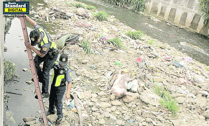 3 dead pigs dumped in QC; ASF eyed