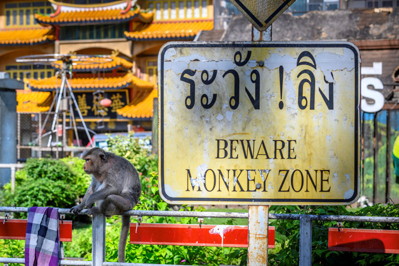 """MONKEY MARAUDER. This picture taken on June 20 shows a longtail macaque climbing on top of a monkey statue in front of the Prang Sam Yod Buddhist temple in the town of Lopburi, some 155km north of Bangkok, while another macaque sit next to a sign reading """"Beware monkey zone"""" (inset). AFP"""