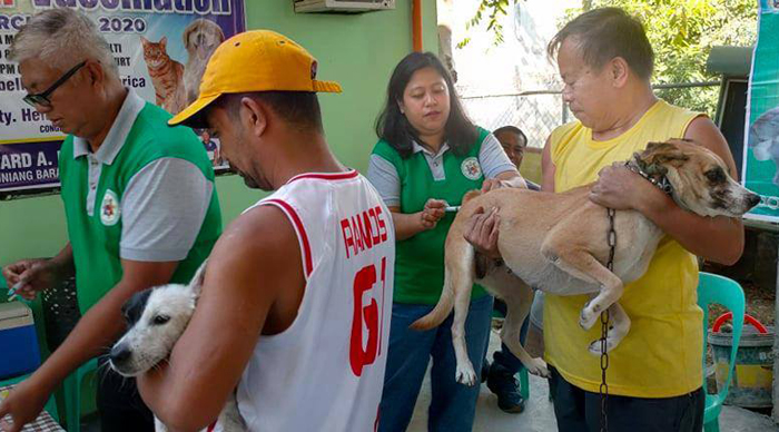 Anti-rabies shot to stop deaths of humans and pets