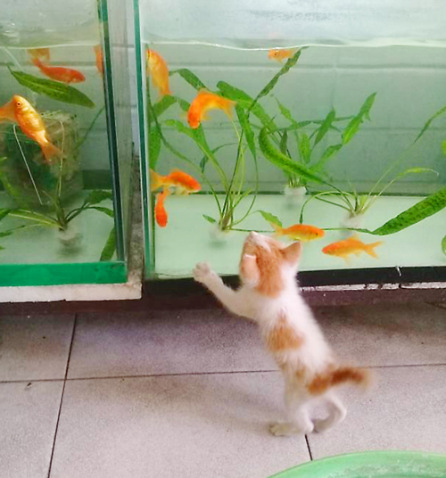 Awra was amazed at the many fish in the tank.