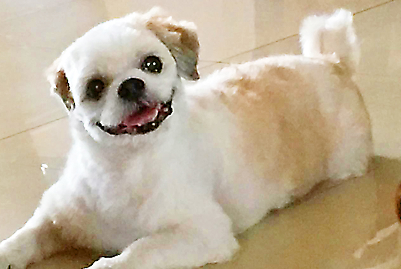 Louise had noticeable joint problems three years ago when she turned 10 years old, a very senior dog for a shih tzu.