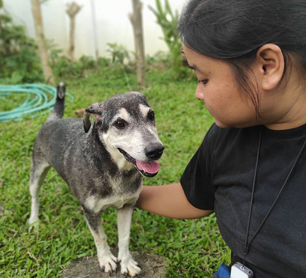 Cloud, a rescued dog of Save Animals of Love, and Light (Save ALL Inc.), is now 13 years old.  His supplements include CoQ10 (30 mg) for the heart,   vitamin b complex, a multivitamin,  and coco nectar.