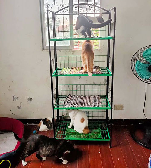 Make sure cats have a space they can call their own. They love high perches and