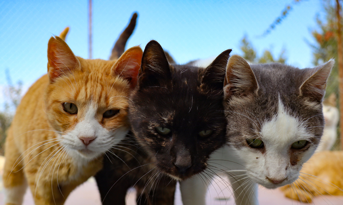 Cyprus cats out in the cold as pandemic bites
