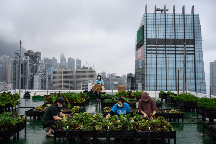 HK's urban farms sprout gardens in the sky