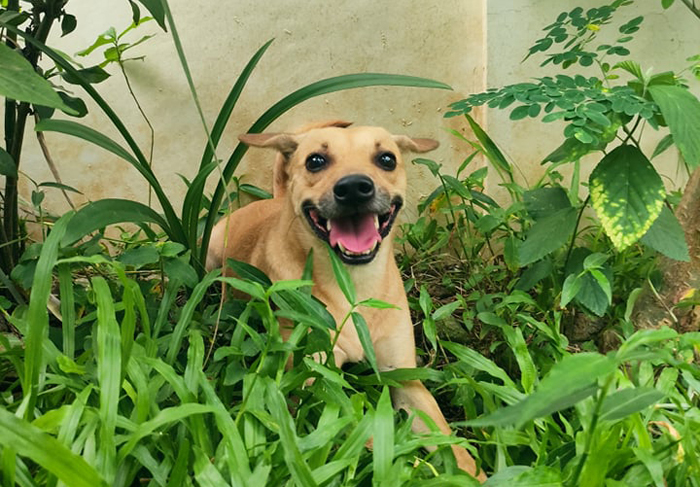 Green beans: the healthy treat for dogs