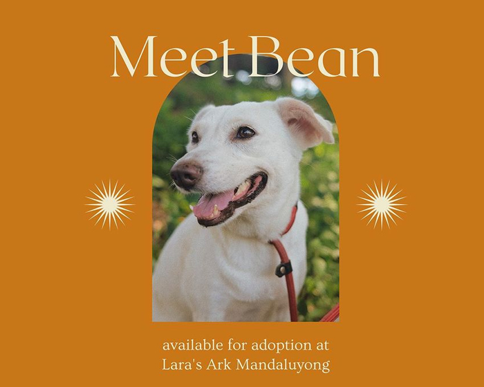 Looking for a four-legged family member? Check out these 5 pet adoption services