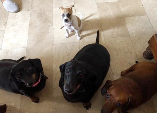 These rescued dogs  have been adopted by celebrity moms  Maritoni and.
