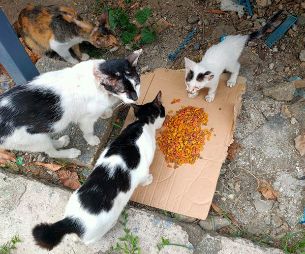 Too many cats to feed, so little food left to give.