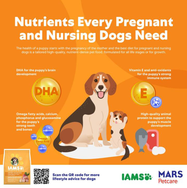 These are what a nursing mother needs to keep her healthy and to provide nutrients  her pups need.